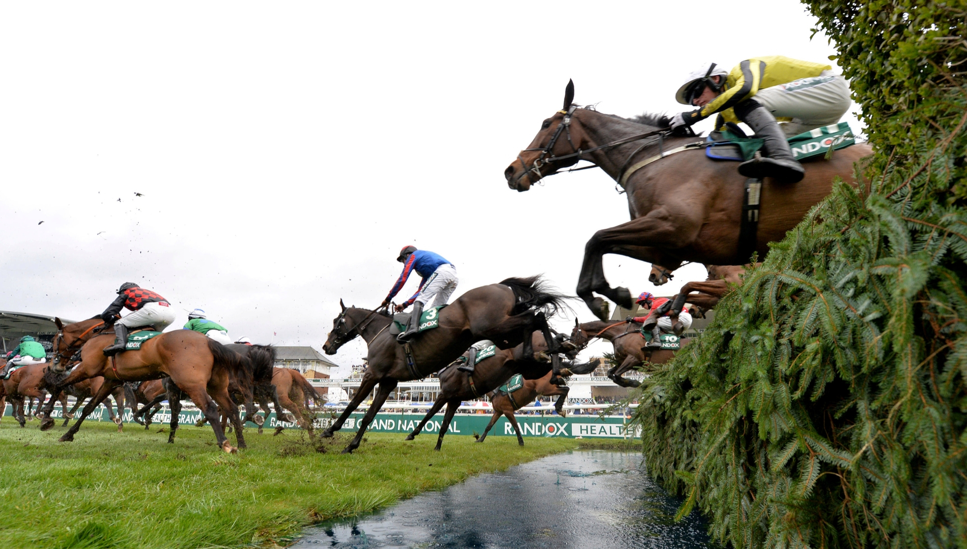 Free Horse Racing Tips From The Best Expert